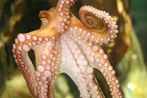 ноги осьминога