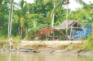 джунгли Новой Гвинеи