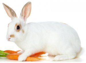 свежая морковка