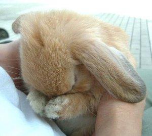 дрожащий кролик