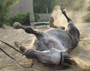 спотыкающийся конь